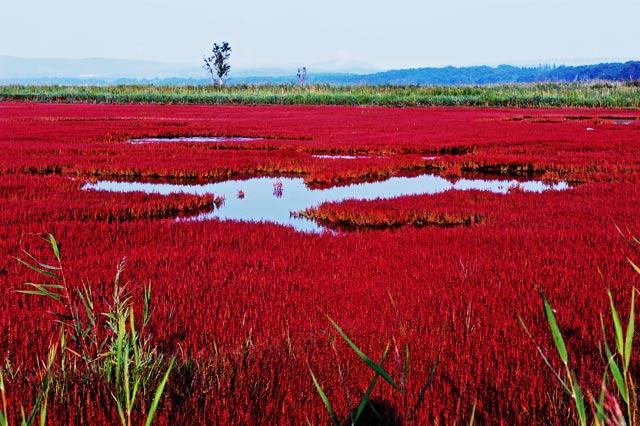 網走市能取湖のサンゴ草