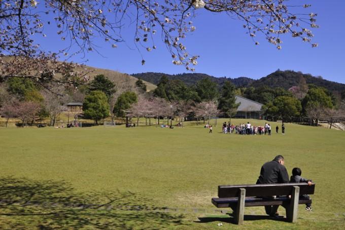 660ヘクタールもある広大な奈良公園