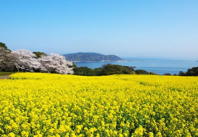 能古島(のこのしま)