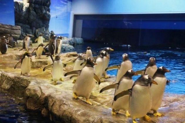 市立 しものせき水族館 海響館