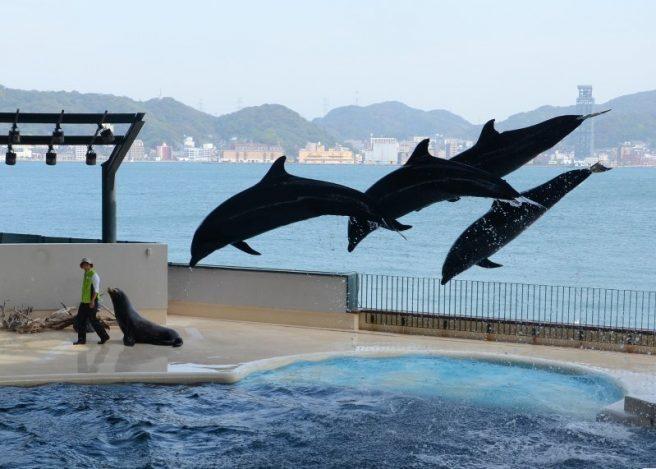 下関が誇る水族館『海響館』