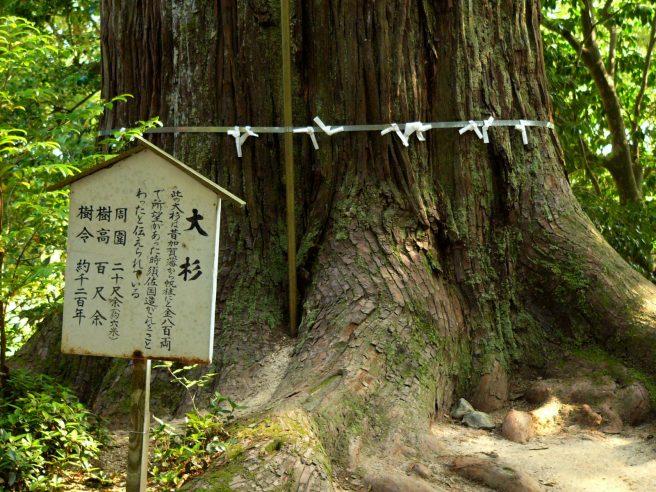 島根 パワースポット 須佐神社