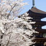 山口県のおすすめの花見スポットを厳選