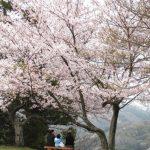 島根県のおすすめ花見スポットを厳選