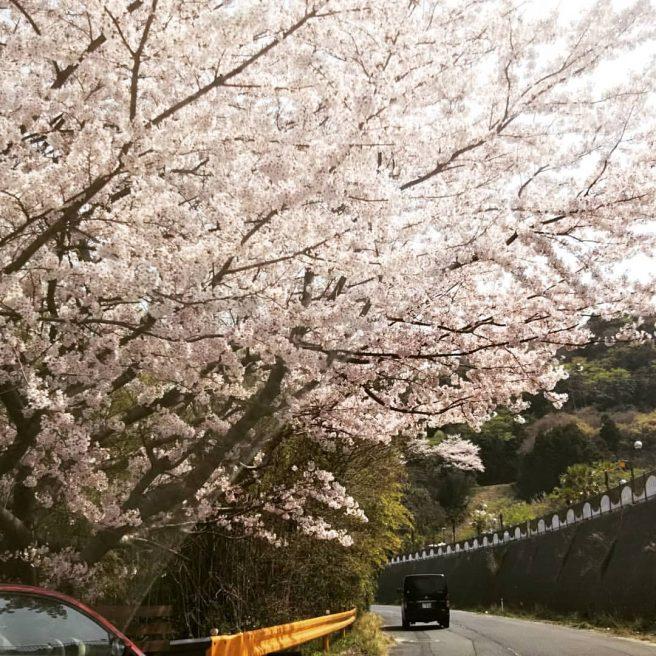 五条千本桜