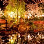 鳥取県のおすすめの花見スポットを厳選