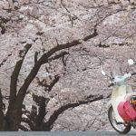 岡山県のおすすめの花見スポットを厳選