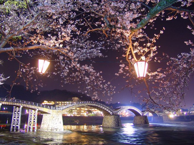 錦帯橋 桜