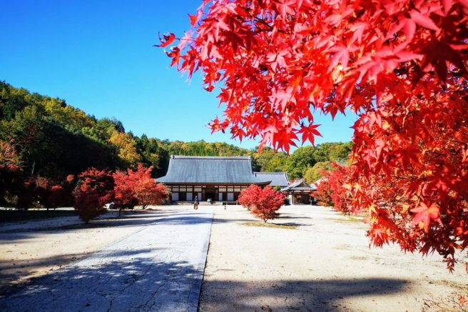 広島 光信寺
