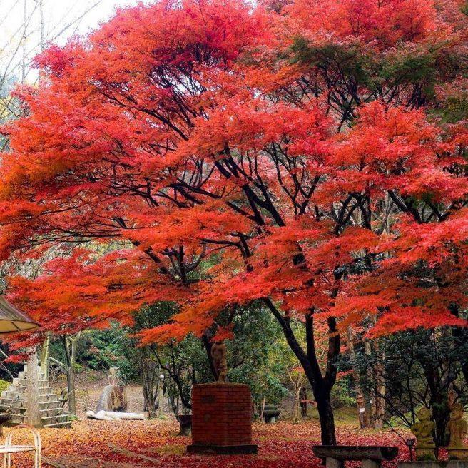 みやま公園 紅葉