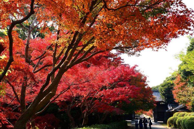 毛利氏庭園 紅葉