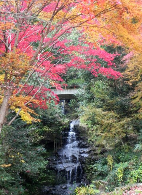 龍蔵寺 奥の滝 紅葉