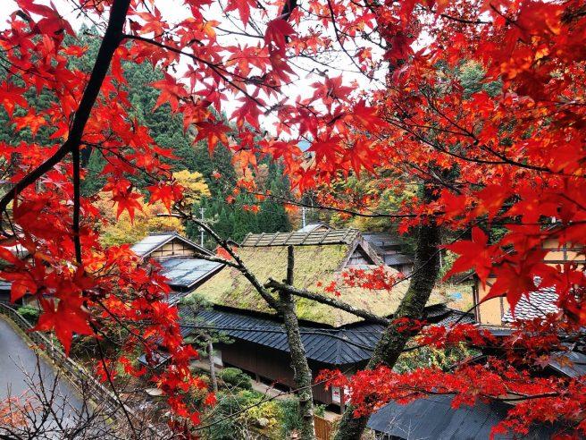 板井原集落 紅葉