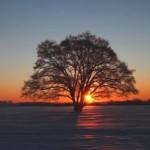 雄大なハルニレの木は町のシンボル
