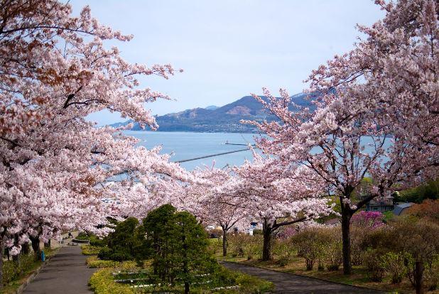 北海道桜の名所