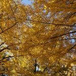 北海道の紅葉の名スポットを厳選