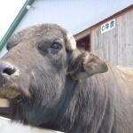 北海道の食品手作り体験型施設を厳選