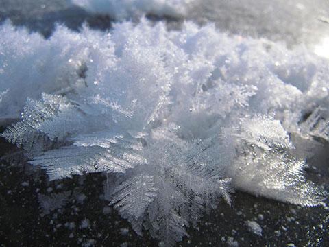 阿寒湖のフロストフラワー