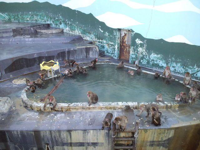熱帯植物園 函館