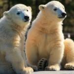 円山動物園のおすすめの見所を一挙ご紹介