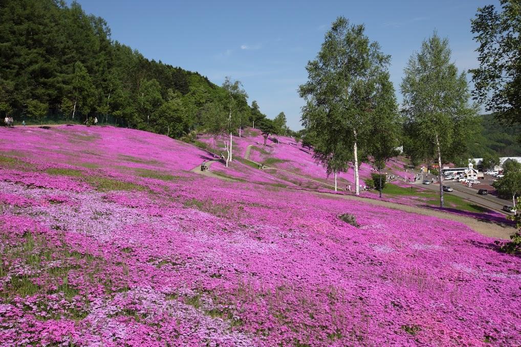 芝桜滝上公園