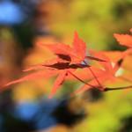 10月に北海道を満喫するならお勧めの観光名所