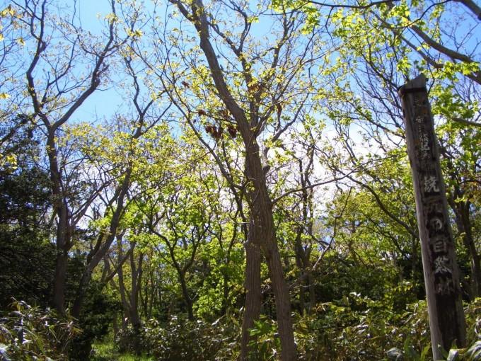 焼尻の自然林
