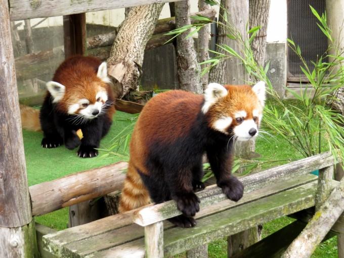 釧路観光スポット 釧路市動物園