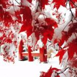 11月に北海道を満喫するならお勧めの観光名所