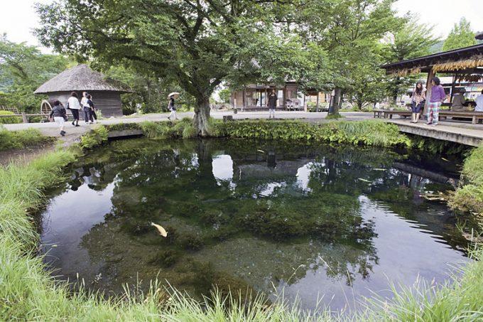湧池(わくいけ)