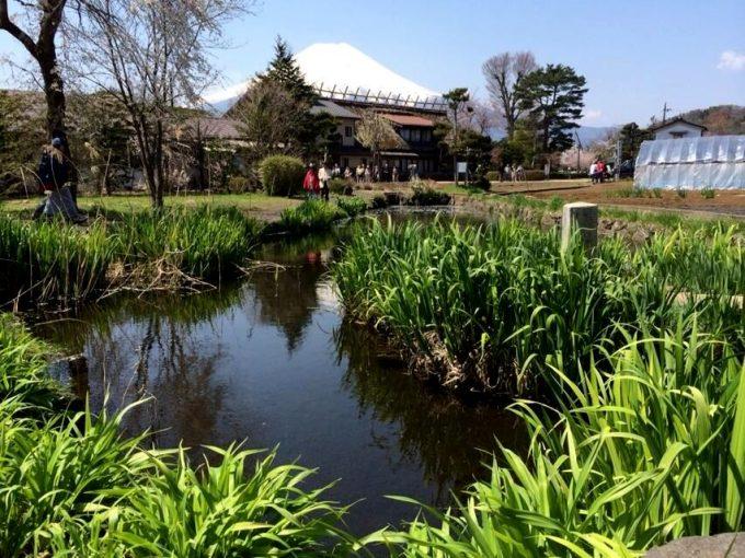 菖蒲池(しょうぶいけ)