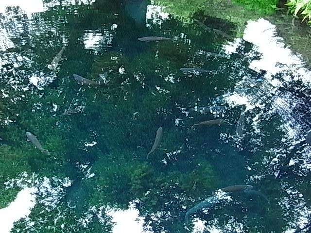 湧池の水中洞窟(わくいけの水中洞窟)