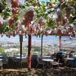 山梨県でフルーツ狩り&収穫体験!秋から冬に行きたいオススメ農園5選