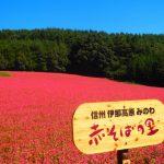 長野県で人生最高のそばに出会う!秋の新そばシーズンに行きたいイベント&名店