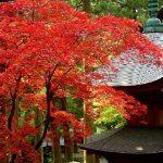 大本山永平寺の見どころを徹底解説!訪れた人だけが体感できる静寂の世界