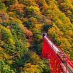 秋色に染まる黒部峡谷へ 人気のトロッコ電車で出かけよう!
