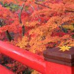 新潟県最強パワースポット!彌彦神社が秋の旅にオススメな理由