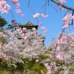 福井県で行きたい春の旅にオススメのお城3選