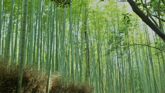 嵐山から嵯峨野竹林