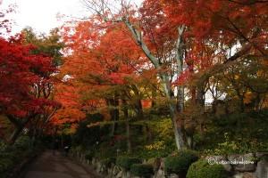 アサヒビール大山崎山荘美術館 紅葉