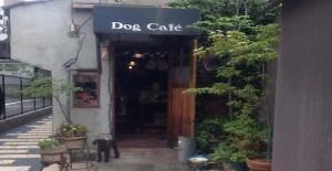 ドッグカフェ店