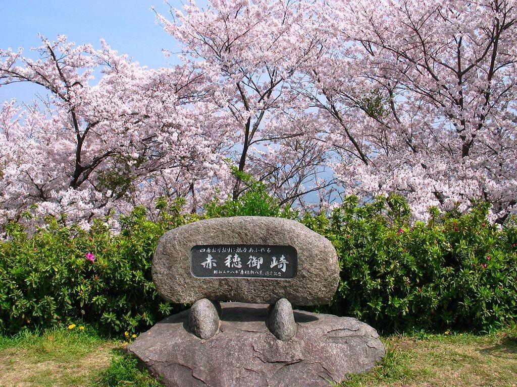 赤穂御崎の桜