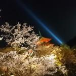 絶対おすすめの京都の桜の名所を厳選