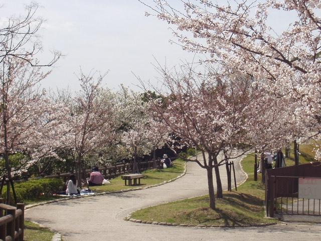 須磨浦公園の桜