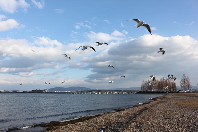 滋賀県民は琵琶湖に外来種を放す人が許せない