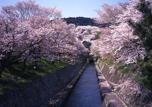 春は水面に映える桜が美しい「琵琶湖疏水の桜」/滋賀県大津市