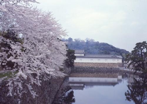 春の国宝を彩る「彦根城の桜」/滋賀県彦根市