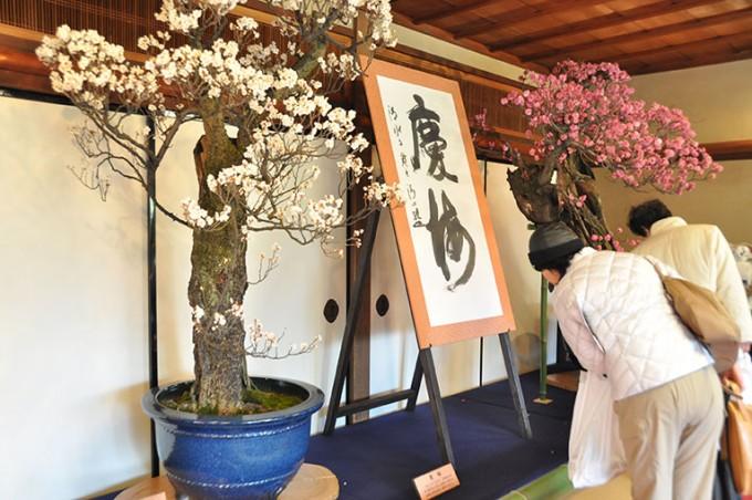 滋賀県のイベント「長浜盆梅展」