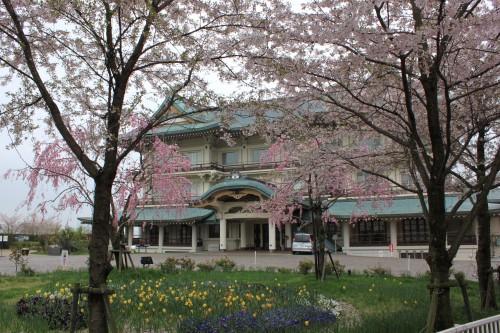 大津の春を彩る「柳が崎湖畔公園のさくら」/滋賀県大津市