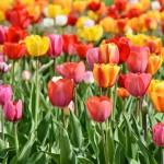 滋賀県の春はここ!遊びどころ満載の滋賀県の春の見所スポット